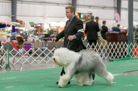 Dogshow 2018-06-13 Starved Rock KC Wed--094016-4
