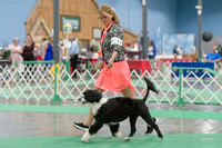 Dogshow 2018-06-13 Starved Rock KC Wed--123908-2