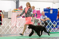 Dogshow 2018-06-13 Starved Rock KC Wed--123131