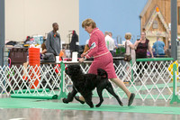 Dogshow 2018-06-13 Starved Rock KC Wed--123534