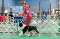Dogshow 2018-06-13 Starved Rock KC Wed--124118