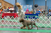 Dogshow 2018-06-13 Starved Rock KC Wed--124335-3