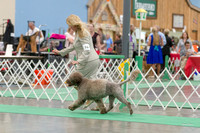 Dogshow 2018-06-13 Starved Rock KC Wed--124336