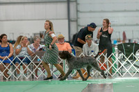Dogshow 2018-06-13 Starved Rock KC Wed--164916