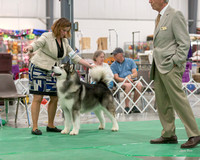 Dogshow 2018-06-13 Starved Rock KC Wed--153300