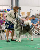 Dogshow 2018-06-13 Starved Rock KC Wed--153301