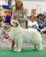 Dogshow 2018-06-13 Starved Rock KC Wed--153555