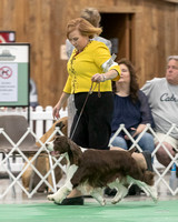 Dogshow 2018-06-15 untitled shoot--171849
