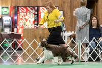 Dogshow 2018-06-15 untitled shoot--171849-2