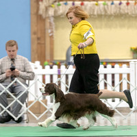 Dogshow 2018-06-15 untitled shoot--171851-3
