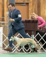 Dogshow 2018-06-15 untitled shoot--172113-3
