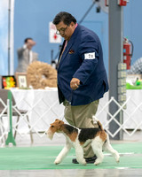 Dogshow 2018-06-15 untitled shoot--172212