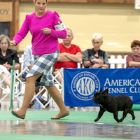 Dogshow 2018-06-15 untitled shoot--172322-3