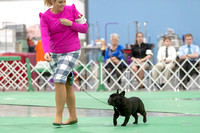 Dogshow 2018-06-15 untitled shoot--172326