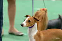 Dogshow 2018-06-15 untitled shoot--164036