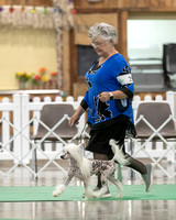 Dogshow 2018-06-15 untitled shoot--164509-2