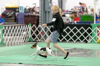 Dogshow 2018-06-15 untitled shoot--164028