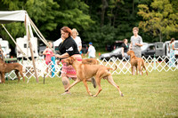 Dogshow 2016-08-13 Oak Creek--101536-5