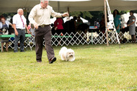 Dogshow 2016-08-13 Oak Creek--090452