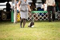 Dogshow 2016-08-13 Oak Creek--090626