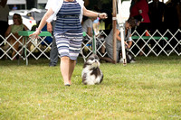 Dogshow 2016-08-13 Oak Creek--090552