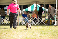 Dogshow 2016-08-13 Oak Creek--150123