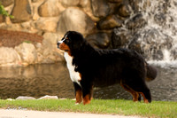 20140920 Rigel the Berner