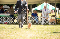 Dogshow 2016-08-13 Oak Creek--150138