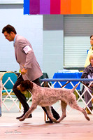 Sporting Breeds and Group