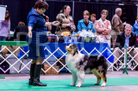 Australian Shepherds - KC of Yorkville, Saturday April 7, 2012