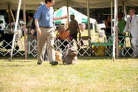 Dogshow 2016-08-13 Oak Creek--150136