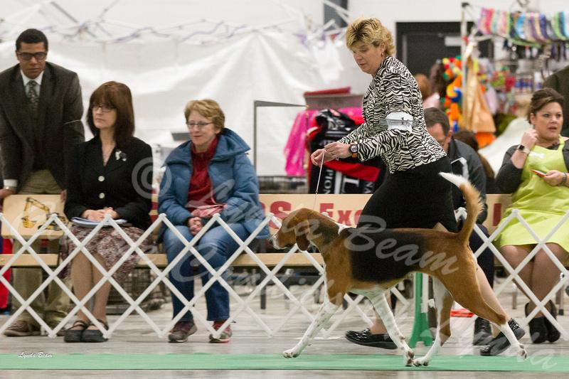 Skokie Dog Show