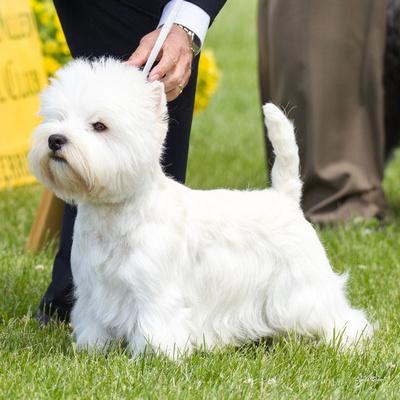 Dogshow 2016-06-05 Woodstock--135628