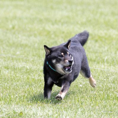 Dogshow 2016-06-11 Oak Creek CAT--115434-2