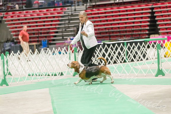 Dogshow 2017-04-08 KC of Yorkville--172632-3