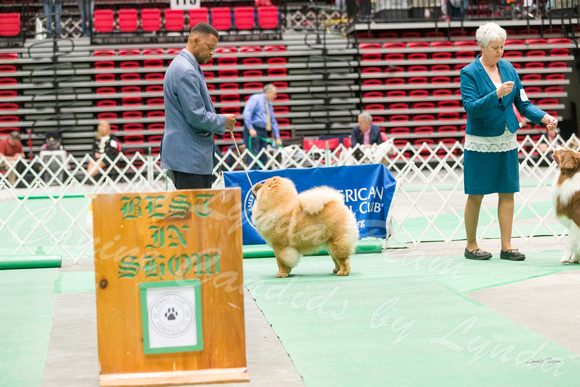 Dogshow 2017-04-08 KC of Yorkville--172705
