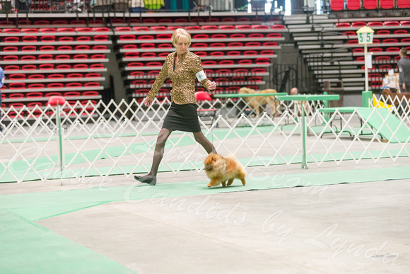 Dogshow 2017-04-08 KC of Yorkville--172553-3