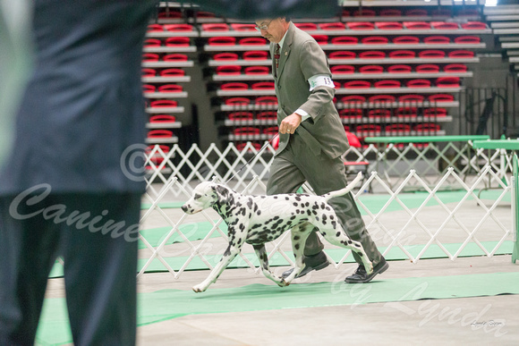 Dogshow 2017-04-08 KC of Yorkville--162325-2