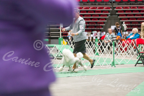 Dogshow 2017-04-08 KC of Yorkville--162348-4