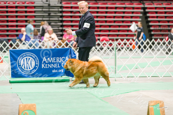 Dogshow 2017-04-08 KC of Yorkville--162408-4
