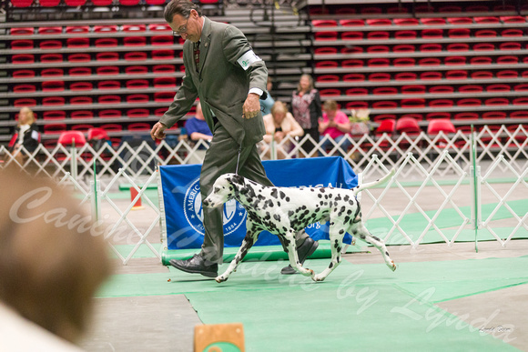 Dogshow 2017-04-08 KC of Yorkville--162449-2