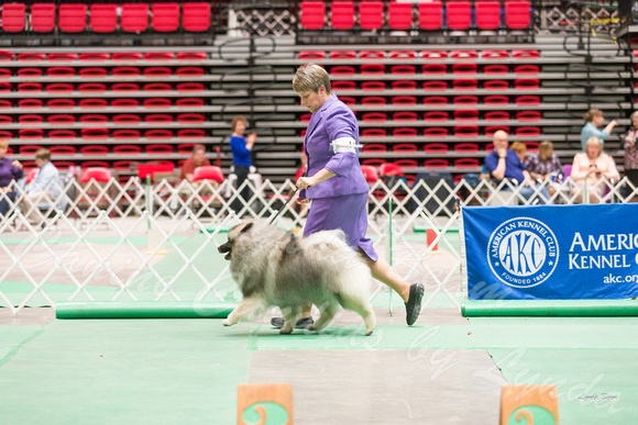 Dogshow 2017-04-08 KC of Yorkville--162719
