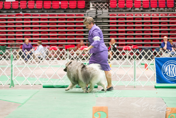 Dogshow 2017-04-08 KC of Yorkville--162719-2
