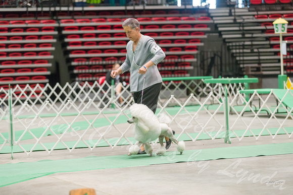 Dogshow 2017-04-08 KC of Yorkville--162913