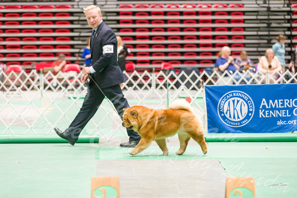 Dogshow 2017-04-08 KC of Yorkville--163301-2