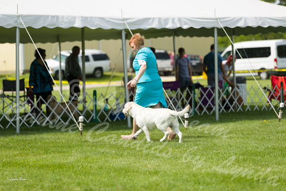 Dogshow 2017-06-04 untitled shoot--102510