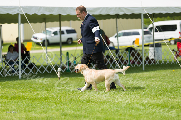 Dogshow 2017-06-04 untitled shoot--103213-2