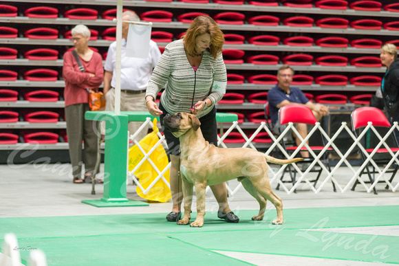 Dogshow 2017-07-08 Greater DeKalb KC--095955-2