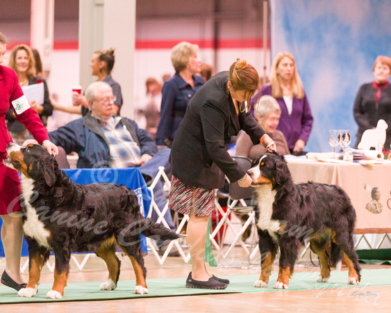 Dogshow 2017-12-09 Skokie Valley KC--093813