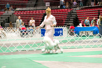 Dogshow 2017-07-08 Greater DeKalb KC--142221-4